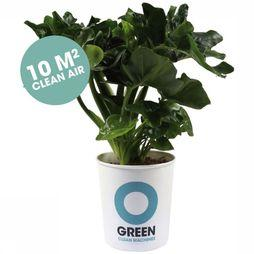 Ogreen Plant Superb Middengroen