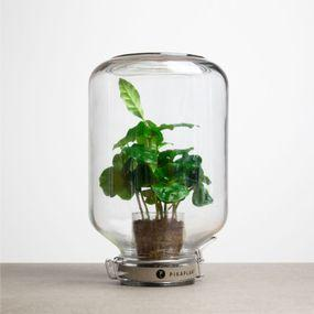 Plante Jar Coffea