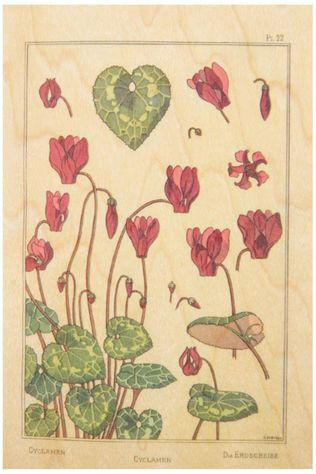 Woodhi Wenskaart Post Card Fleurs Cyclamen Lichtbruin/Assorti / Gemengd