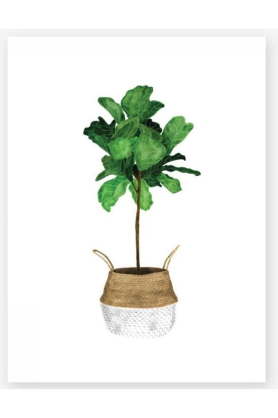 All the ways to say Poster Fiddle Leaf Tree Klein Geen kleur / Transparant
