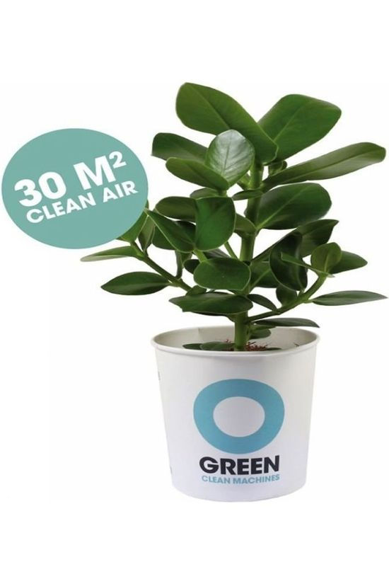 Ogreen Plant Champ Middengroen