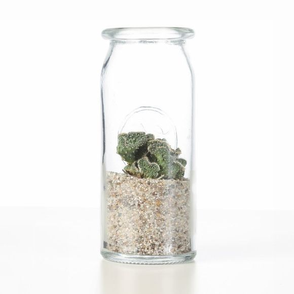 Bluet Plant Cactus Bottled Groen